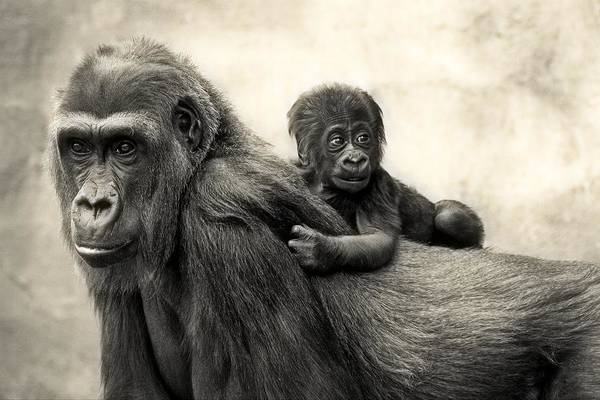 Primate Photograph - L.i.f.e. by Antje Wenner-braun