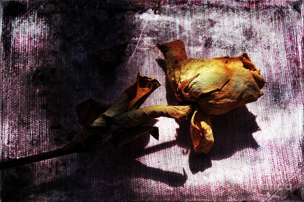 Photograph - Life Ended by Randi Grace Nilsberg