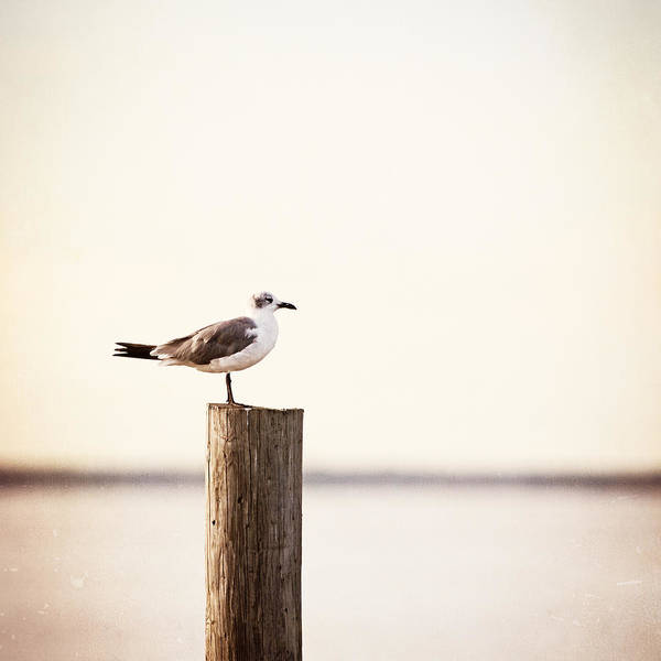 Beach Cottage Wall Art - Photograph - Life On The Bay by Carolyn Cochrane