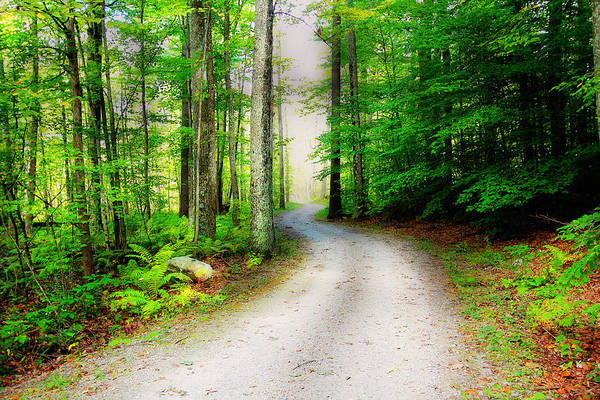 Photograph - Life's Winding Road by Trina  Ansel