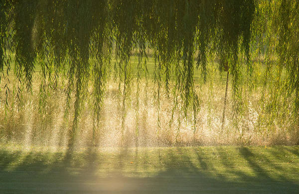 Photograph - Light And Shade by Rima Biswas