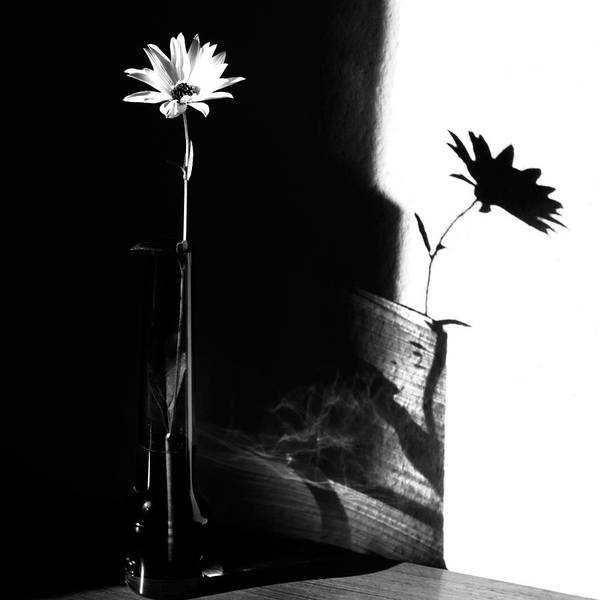 Contrast Wall Art - Photograph - Light And Shadow by Susanne Wolf