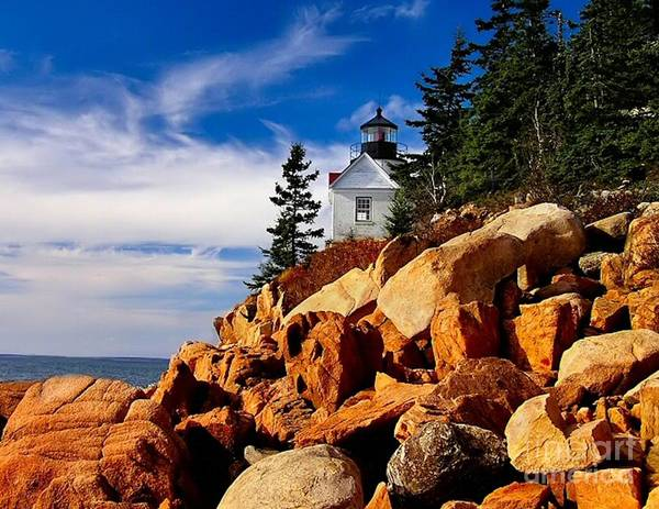Photograph - Light At Bass Harbor by Nick Zelinsky