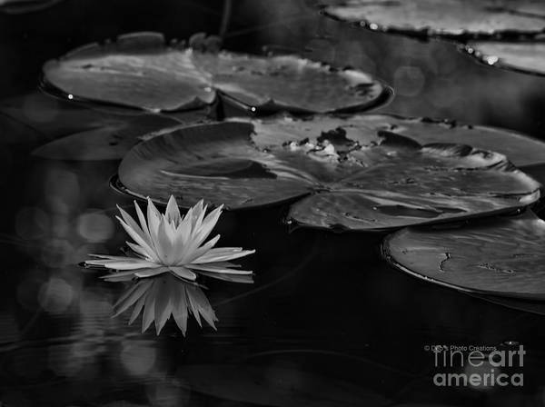 Lilly Pad Photograph - Light In The Darkness by Deborah Benoit
