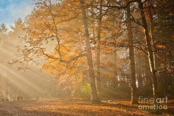 Missionary Photograph - Light In The Forest by Bridget Calip