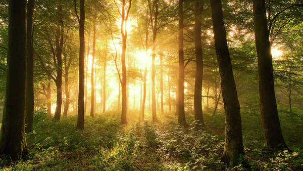 Sunbeam Photograph - Light In The Forest. by Leif L?ndal