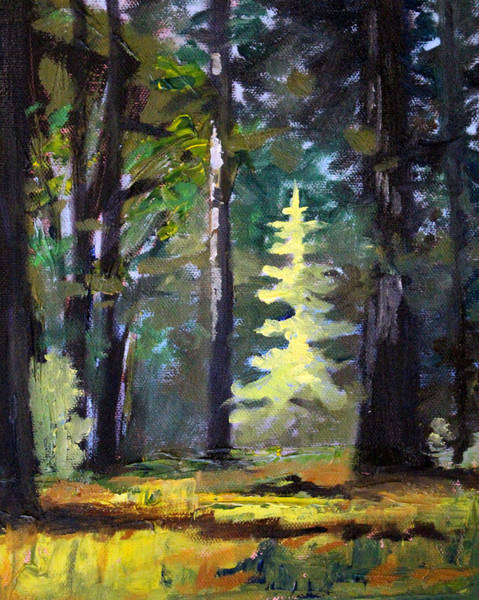 Central Oregon Wall Art - Painting - Light In The Forest by Nancy Merkle