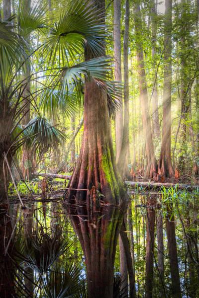 Cypress Knees Photograph - Light In The Hammock by Debra and Dave Vanderlaan