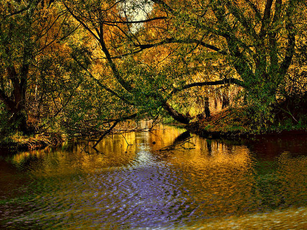 Photograph - Light In The Trees by Leif Sohlman