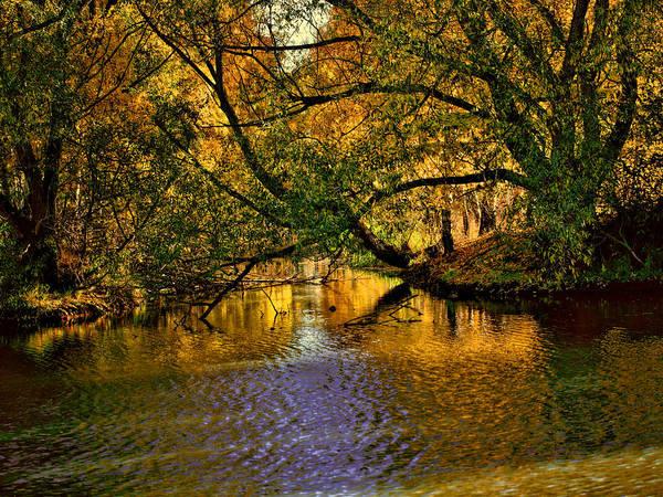 Light In The Trees Art Print