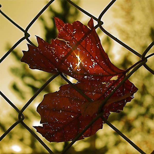 Photograph - Light Leaf Links by Rona Black