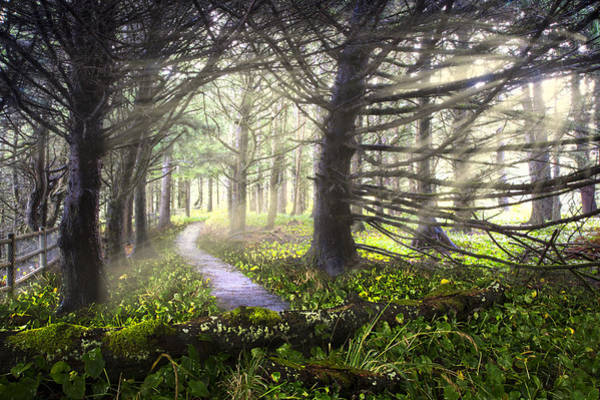 Rogue River Wall Art - Photograph - Light On The Trail by Debra and Dave Vanderlaan