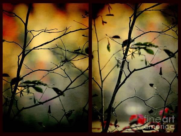 Aimelle Photograph - Light Through Shadow by Aimelle
