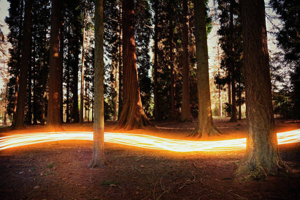 Urban Nature Photograph - Light Trail Passing Around Trees by Robert Decelis Ltd