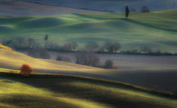 Shrubs Photograph - Light Transition by Marek Boguszak