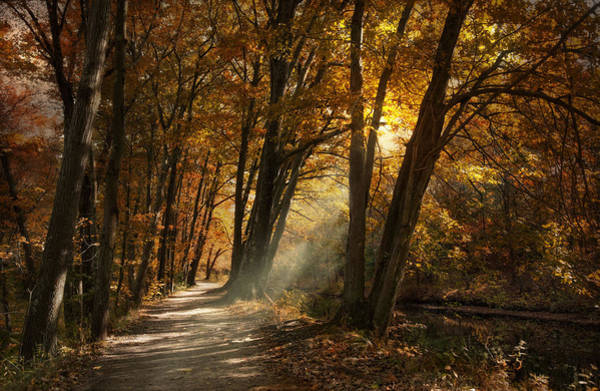 Photograph - Lighting The Path by Robin-Lee Vieira