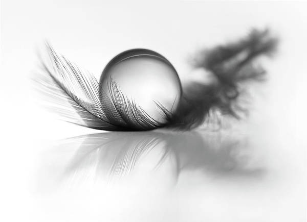 Drop Photograph - Lightness by Aida Ianeva