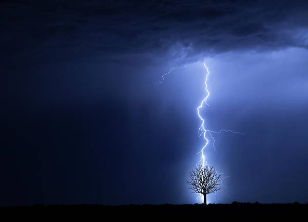 Damaged Photograph - Lightning And Tree by Don Farrall