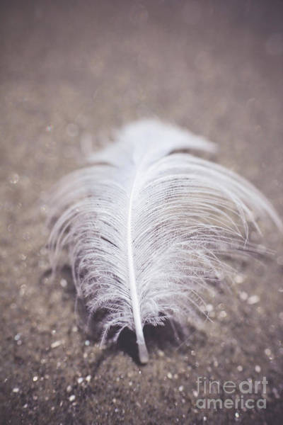 Photograph - Like A Feather On The Wind by Trish Mistric