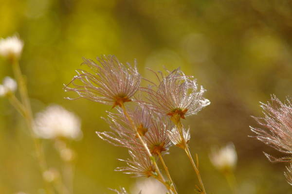Living Things Photograph - Like Little Feathers Tickling The Wind by Jeff Swan