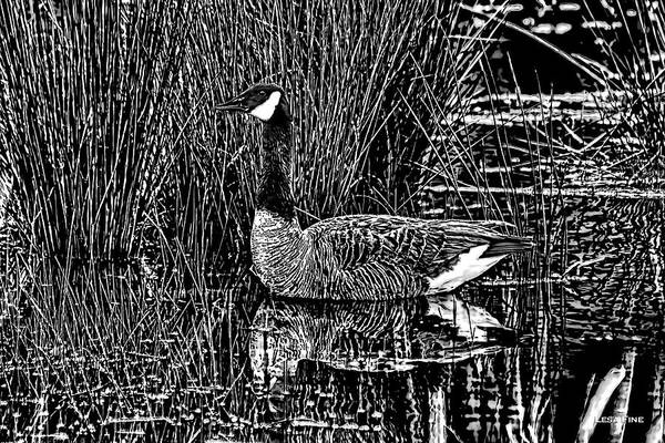 Photograph - Lila Goose The Pond Queen Hdr Grass Art Bw by Lesa Fine