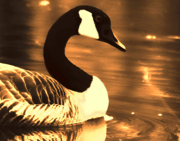 Photograph - Lila Goose The Pond Queen Sepia by Lesa Fine