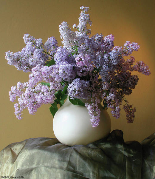 Anna Photograph - Lilac Flowers In Vase by Anna Miller