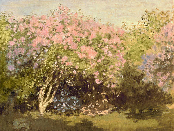 Wall Art - Painting - Lilac In The Sun, 1873 by Claude Monet