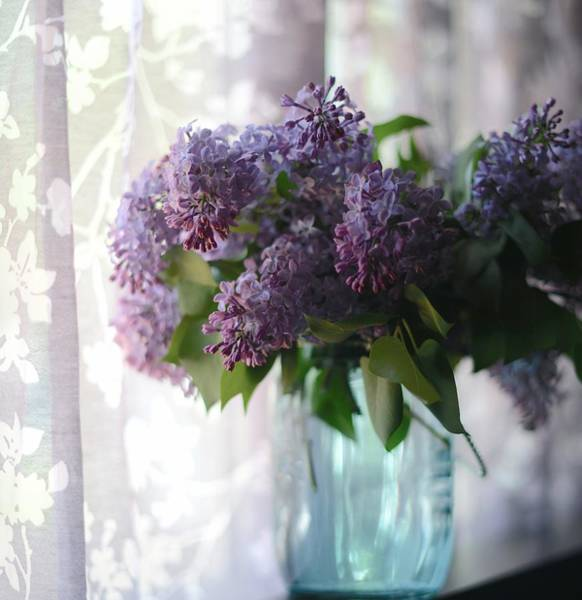 Wall Art - Photograph - Lilac Morning by Linda Mishler