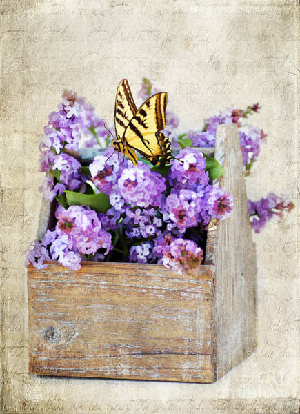 Spring Blossom Photograph - Lilacs And The Butterfly by Darren Fisher