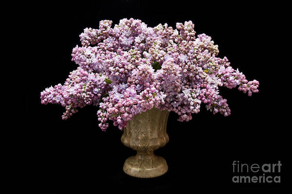 Flowers In A Vase Photograph - Lilacs In A Green Vase - Flowers - Spring Bouquet by Andee Design