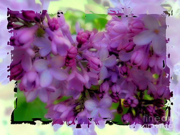 Photograph - Lilacs by Jeff Breiman