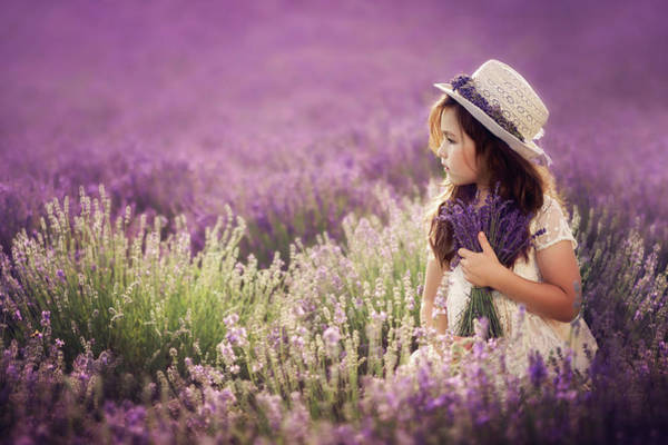Lavender Wall Art - Photograph - Lili by Jana Kvaltinova