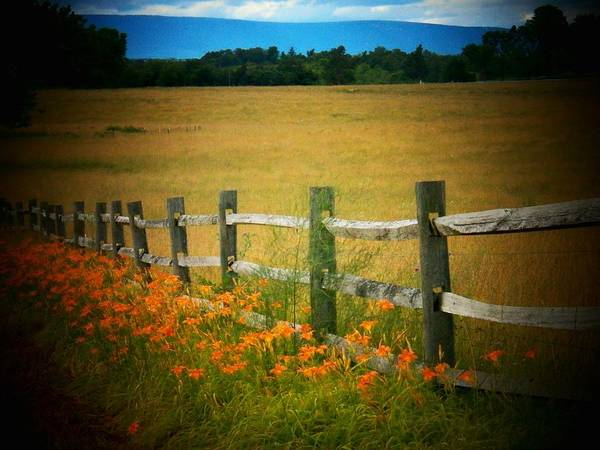 Frederick County Wall Art - Photograph - Lilies By The Fence by Joyce Kimble Smith