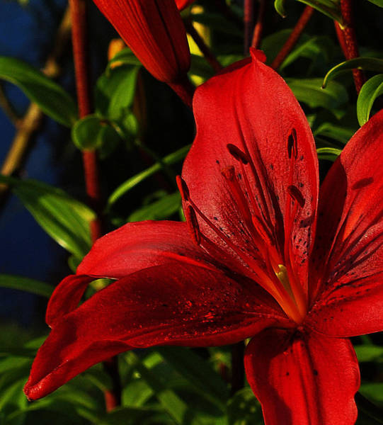 Photograph - Lilies By The Water by Randy Hall