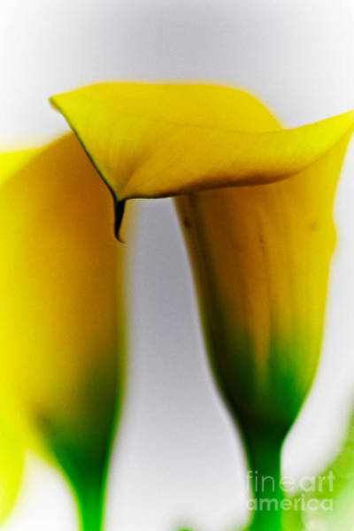 Photograph - Lilies by Charles Muhle