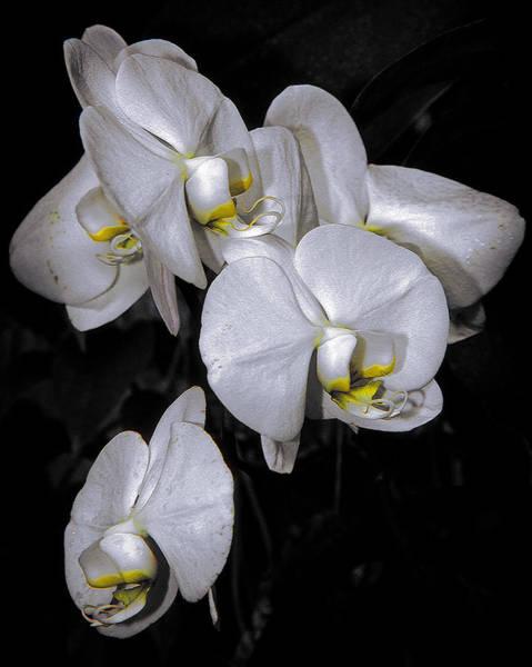 Photograph - Orchids by Elaine Malott