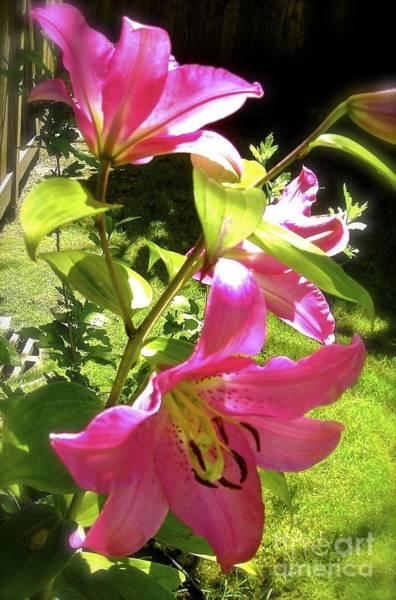 Lilies In The Garden Art Print