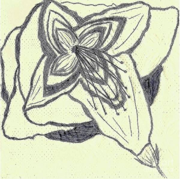 Surrealist Drawing - Lilly Artistic Doodling Drawing by Joseph Baril