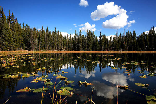 Photograph - Lilly Pond by Darryl Wilkinson