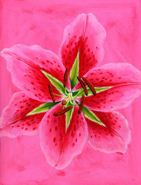 Wall Art - Photograph - Lily by MGL Meiklejohn Graphics Licensing