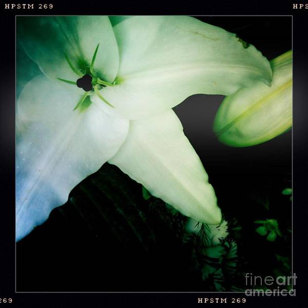 Photograph - Lily by Denise Railey