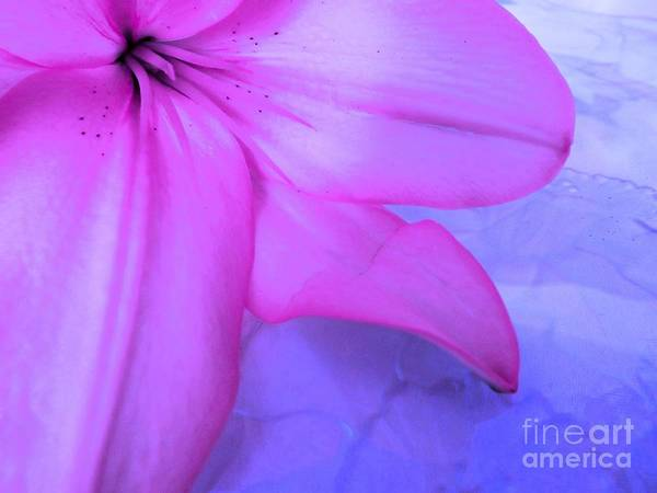 Photograph - Lily - Digital Art by Robyn King