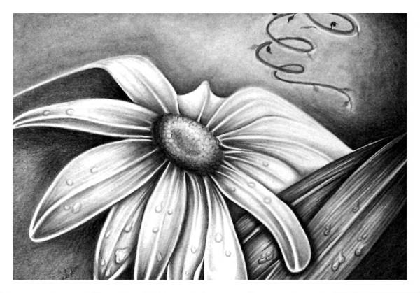 Drawing - Lily Flower by Owen Lafon