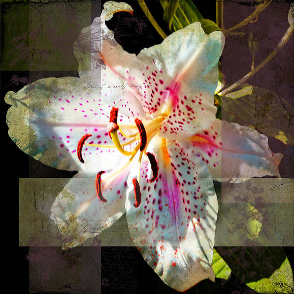 Lily From Whitefish Point Michigan Art Print