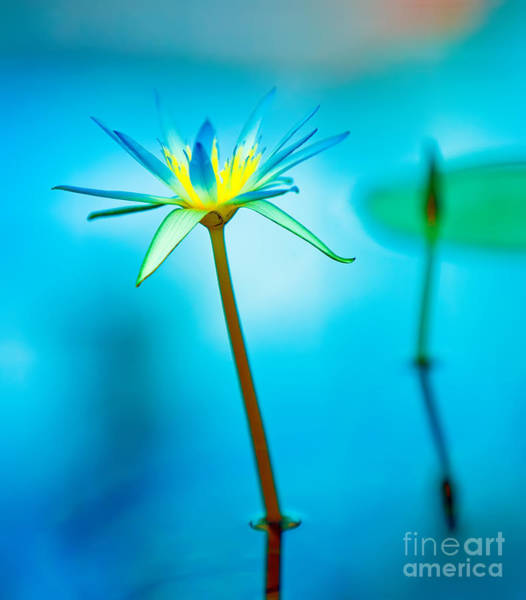 Wall Art - Photograph - Lily In Blue by Bill  Robinson