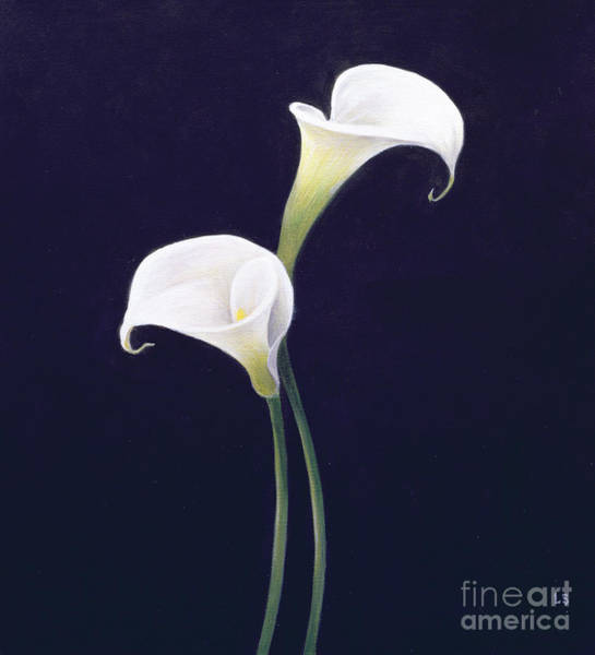 White Background Wall Art - Painting - Lily by Lincoln Seligman
