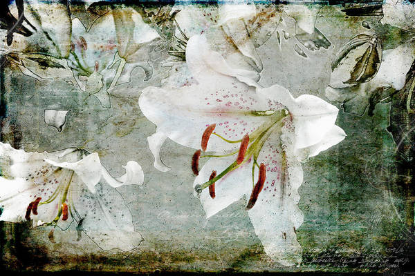 Photograph - Lily Memoir by Evie Carrier