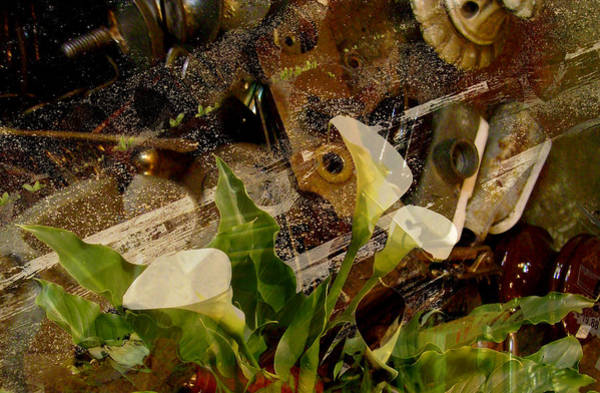 Photograph - Lily Of The Scrap Pile by Laureen Murtha Menzl
