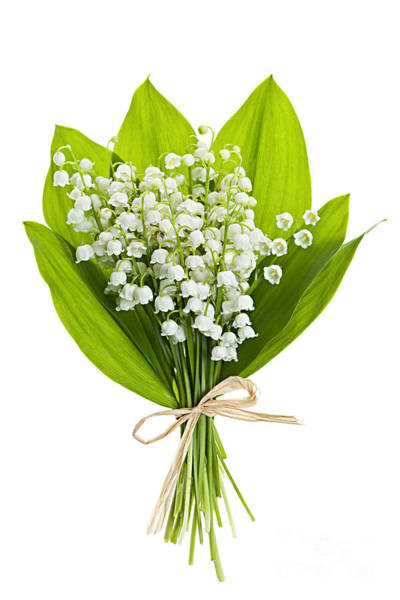 Wall Art - Photograph - Lily-of-the-valley Bouquet by Elena Elisseeva